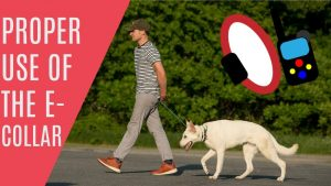 How to use an E Collar properly Dog Training with Americas Canine Educator