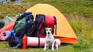 Dog Posing in Front of a Tent