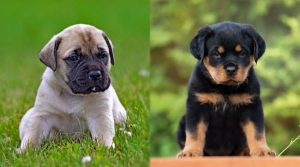 Cute-Puppy-Dogs-Sitting-Outdoors