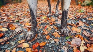 Dog-Paws-With-Dirt-All-Over