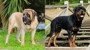 Large-Dogs-Standing-Outdoors