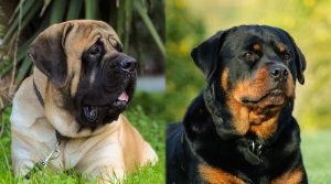 Large-Dogs-With-Beautiful-Coats