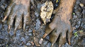 Puppy-Paws-Covered-in-Dirt