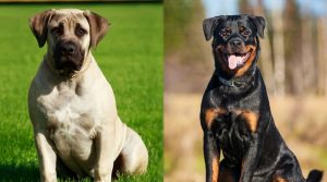 Well-Trained-Dogs-Sitting-Outdoors