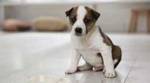 Puppy-Next-to-a-Puddle