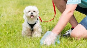 Small-White-Dog-Waits-as-Owner-Picks-Up-Poop