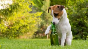 Terrier-With-Green-Glass-Bottle
